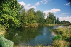 Ponds in Milden, Suffolk